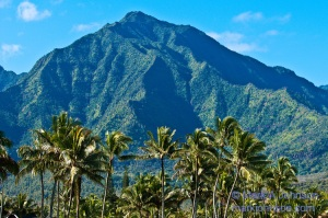 Palm trees and mountains, Hanalei, Kauai, Hawaii